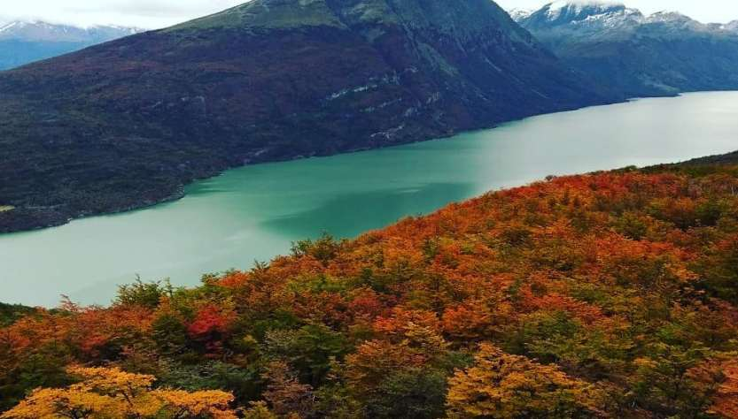Lengas Patagonia.