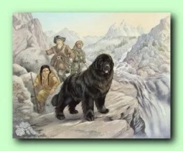 Seaman, the Newfoundland that accompanied Lewis and Clark on their expedition