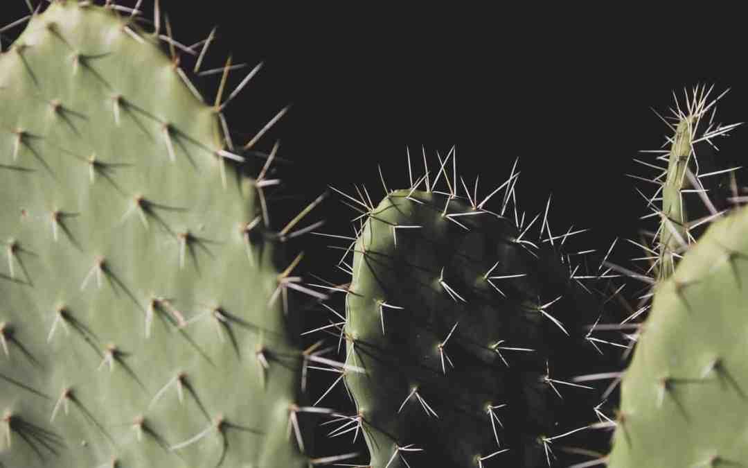 passiv aggressiv Kommunikationsverweigerer Kaktus