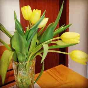 Alltagskunst Tulpen
