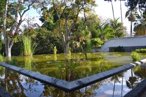 Estanque de plantas acuáticas