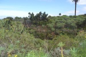 Sendero de borde de Barranco de La Cruz, Santa Úrsula