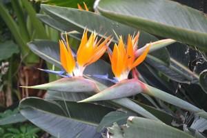 Jardines Hijuela del Botánico en La Orotava
