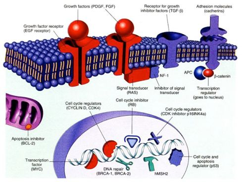 molecular neoplasia