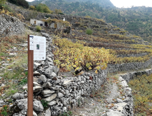 Samos – Path of the Muscat Vineyards