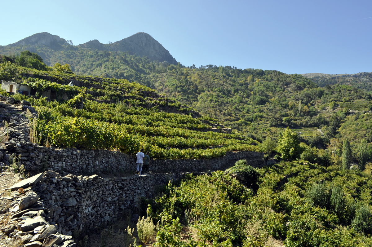 panorama of the path of the muscat vineyards