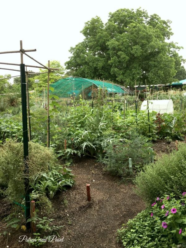 the natural gardener 14