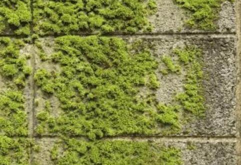 how do i get rid of moss on a concrete