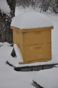 Beehive in the snow