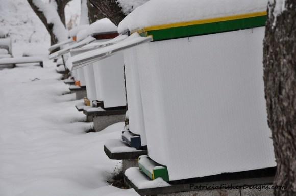 honeybees in winter