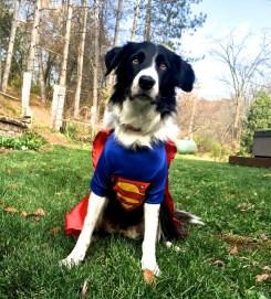 Superman Willie