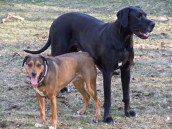 Sandy & Otis - Em Small