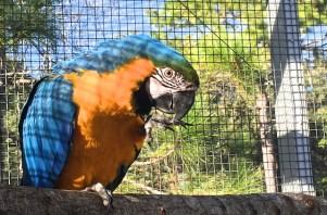 Meg's BG Macaw #1