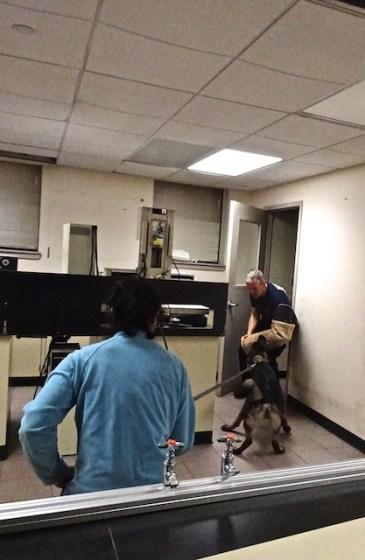 Police Dog Jerry WDC 3-17