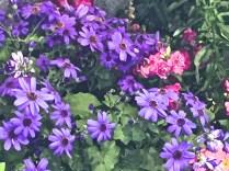 Purple pink Olbrich 3-17