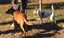 str tail NYC dog 2017