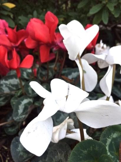 la flowers