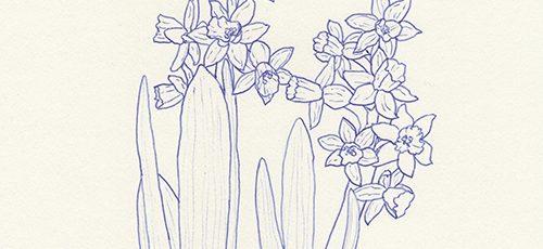 Zeichnung Sachbuch Verlag Kreativ Blume zeichnen Ideen