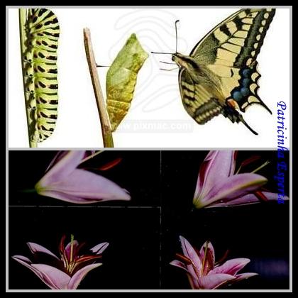 Metamorfose - As mudanças necessárias