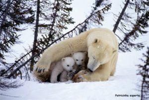polar bear 5 300x201 - Demonstre amor!!!