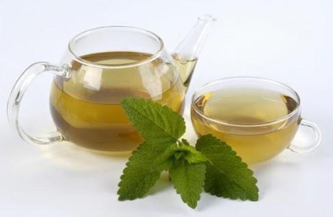 cidreira - Benefícios da Erva-Cidreira ( Melissa)