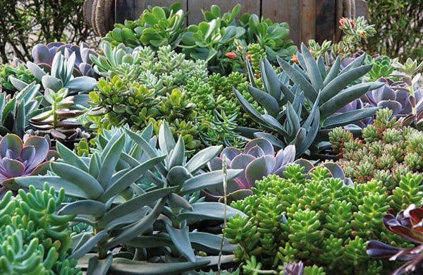ervas medicinais1 - Os benefícios das plantas medicinais (parte2)