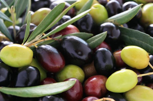 variedades de azeitona - Oli-Ola: A Pílula da Beleza!
