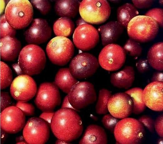Captura de tela inteira 14042013 172913 - Camu-Camu: A Rainha da Vitamina C