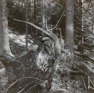 "ur bokbrojektet ""Skomarka"", AgPl-typi A kall, på tumba svenskt arkiv."