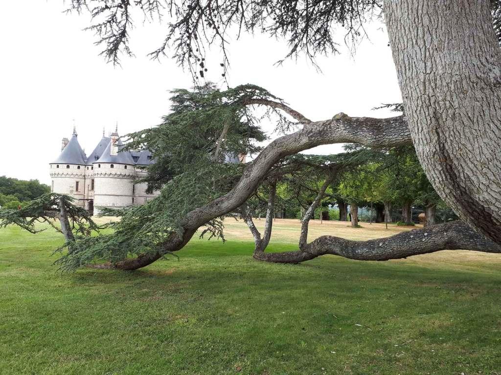 le parc de Chaumont-sur-Loire