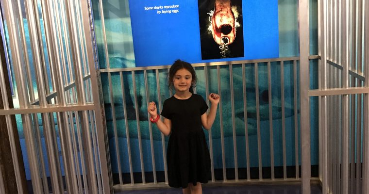 The Maritime Aquarium – Norwalk, CT