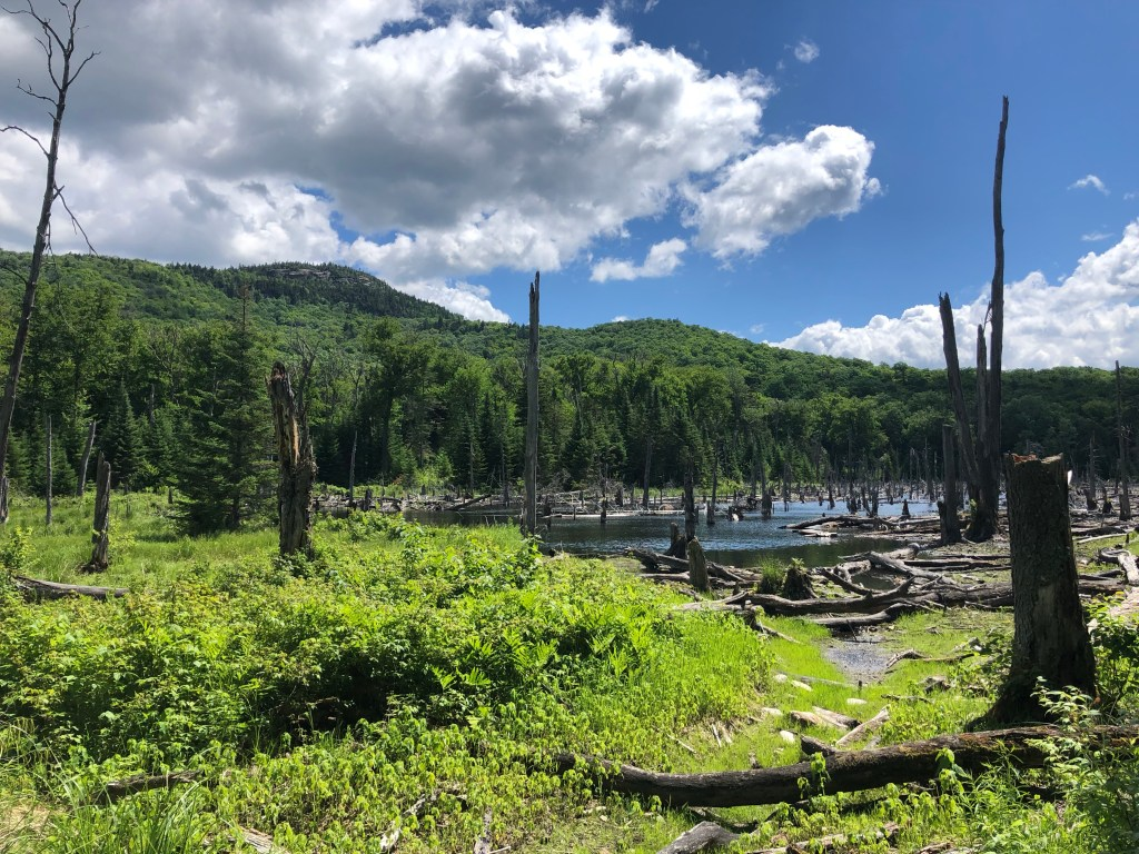 Mt Van Hovenburg Adirondacks #lakeplacid #adirondacks #mtanhovenburg #hikewithkids #hikingfamily #hike #iloveNY