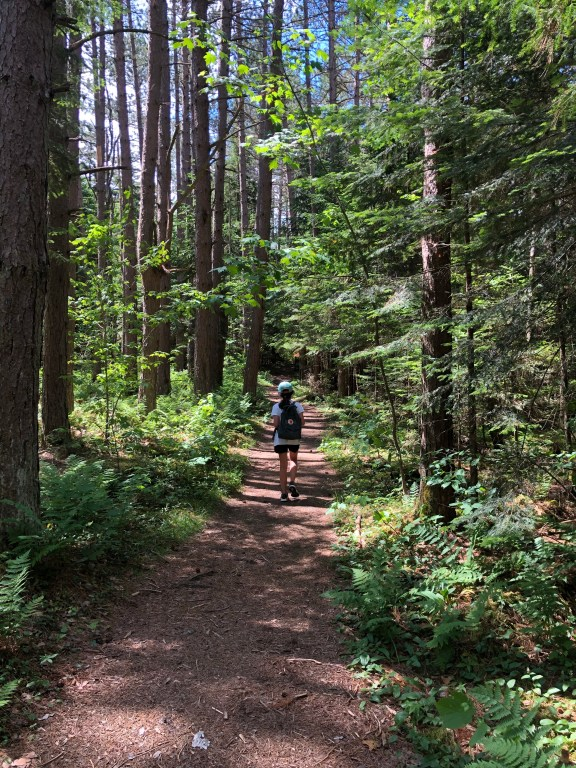 Mt Van Hovenburg Trail Lake Placid Adirondacks NY #upstatenY #lakeplacid #newyorkstate #adirondacks #hikingkids #hike #hikeNY