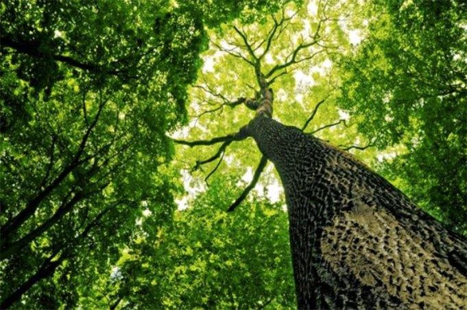 ส่งงานออนไลน์ ช่วยต่อชีวิตต้นไม้ได้หลายล้านต้น