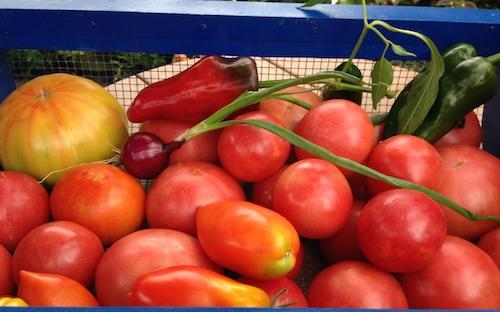 Paste tomatoes, Arkansas traveler, Giant Martian, Gold Medal