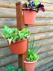 The top three planters in the My Garden Post are growing salad greens.