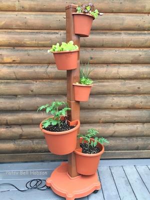 Starter plants in My Garden Post.