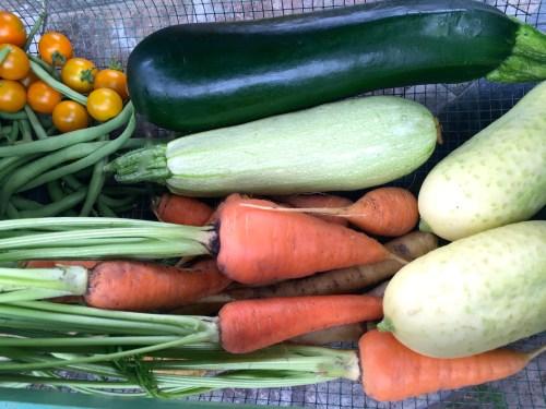 zucchini, cucumbers, cherry tomatoes, green beans