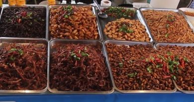 Model Take a look at of all of the Bugs at a Thailand Market. Model Testing Thai Snacks & Facet road Food