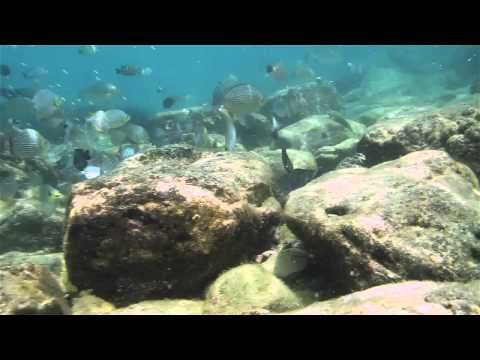 Snorkeling stop to Pattaya, Thailand