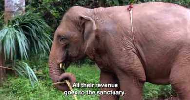 An Elephant Sanctuary that rescues other folks too – Thailand