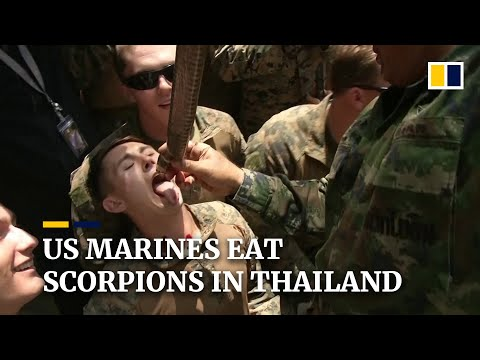 Coronavirus: US Marines learn jungle survival in Thailand as workout routines move forward no matter epidemic