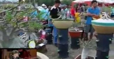 Adenium Thai Socotranum Contest, Dec 07 Thailand