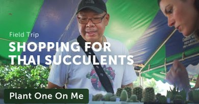 Browsing Thailand's Cactus & Succulent Magnificent — Plant One On Me — Ep 138