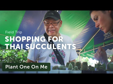 Browsing Thailand's Cactus & Succulent Magnificent — Plant One On Me —Ep 138