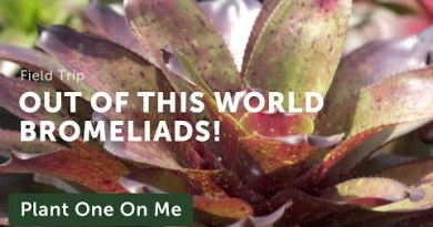 Bromeliad & Tillandsia Tour at Nong Nooch Tropical Backyard, Thailand — Plant One On Me — Ep. 145