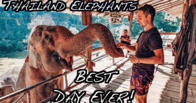 Elephant Tour in Chiang Mai, Thailand | Perfect Day Ever!