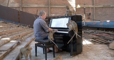 Piano for Macaques in Abandoned Cinema – Thailand #2