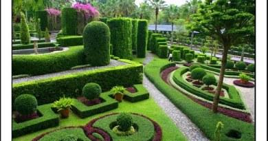 Nong Nooch Tropical Botanical Backyard (Allotment 2) Pattaya Thailand