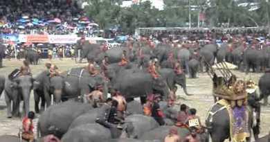 Surin Elephant Competition, Thailand, November 2011